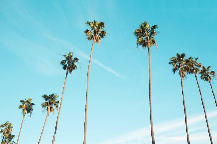 Tall Trees Scenery