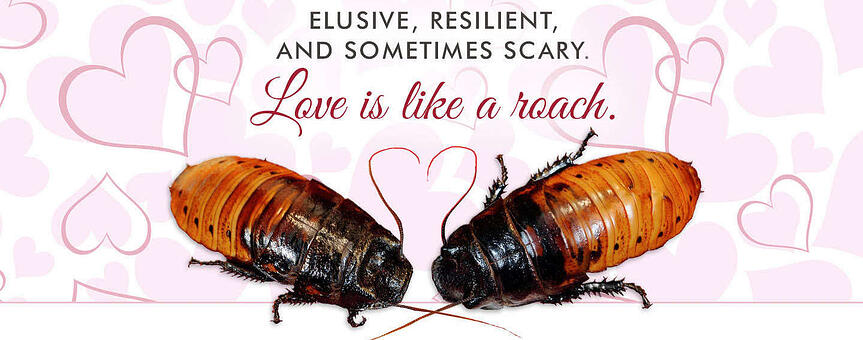 Valentine's Day Campaign Poster for Bronx Zoo